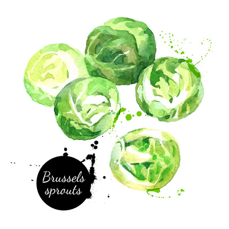 grocer: Watercolor hand drawn fresh brussels sprouts. Isolated organic natural eco vector illustration on white background
