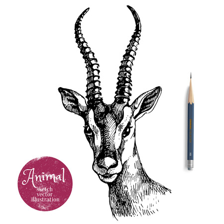 Hand drawn antelope portrait  animal vector illustration. Sketch isolated on white background with pencil and label banner