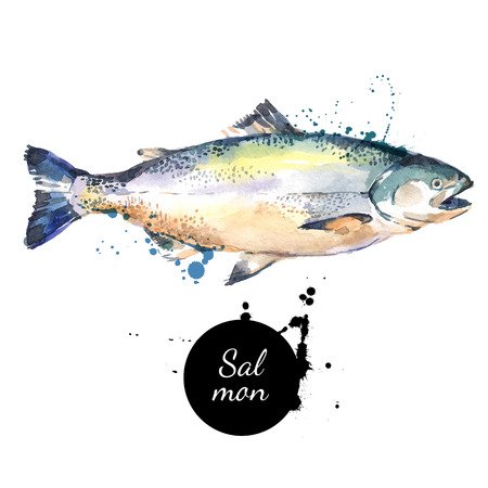 Watercolor hand drawn salmon. Isolated fresh seafood illustration on white background