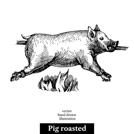 Hand drawn sketch roasted pig. Vectores