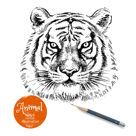 feline: Hand drawn tiger head illustration. Sketch isolated tiger portrait on white background with pencil and label banner Illustration