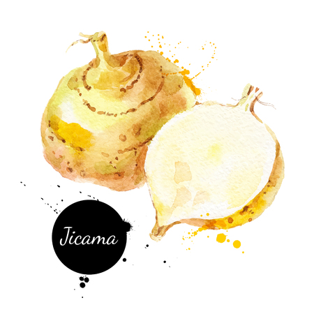Hand drawn sketch watercolor jicama.