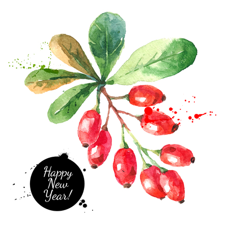 barberries: Watercolor ripe barberries. Hand drawn vector isolated christmas illustration