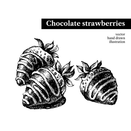 assorted petite: Hand drawn sketch chocolate strawberries dessert bar. Vector black and white vintage illustration. Isolated object Menu design