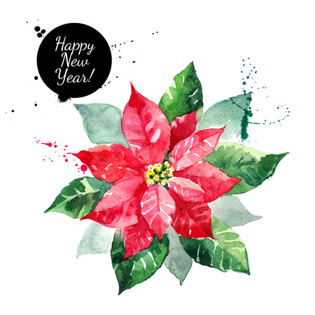 winter flower: Poinsettia flower. Christmas Star watercolor vector isolated illustration
