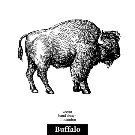 Hand drawn sketch animal Buffalo American Bison. Vector black and white vintage illustration. Isolated object Vettoriali