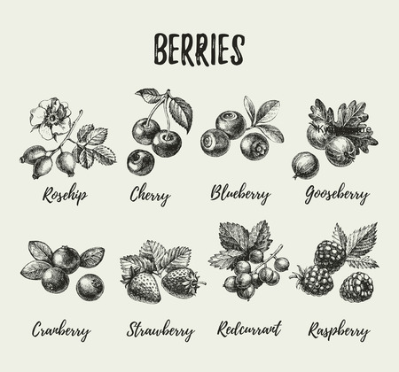 Hand drawn sketch berries set. Vector illustration of eco food