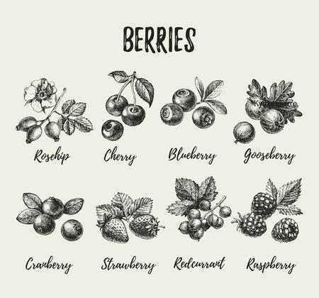 Hand drawn sketch berries set. Vector illustration of eco food