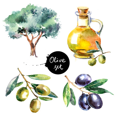 Set of hand drawn colorful watercolor olive painting isolated on white background. Illustration of fruit olives, olive tree, olive oil