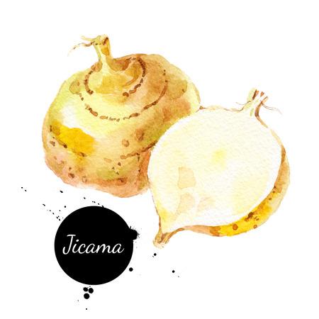 Hand getekende schets waterverf jicama. Geïsoleerde plantaardige voedsel illustratie Stockfoto
