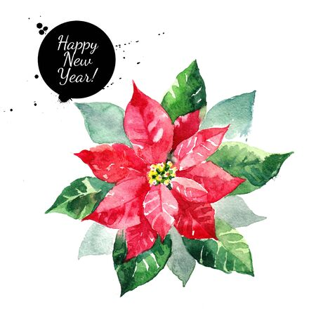 Poinsettia flower. Christmas Star watercolor isolated illustration