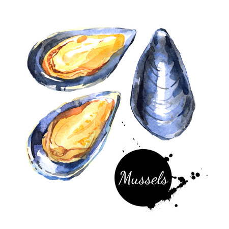 Watercolor hand drawn fresh mussels. Isolated organic natural illustration on white background Imagens