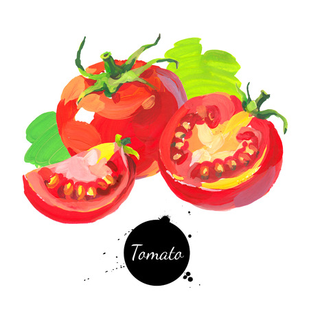 Tomato set. Hand drawn sketch watercolor acrylic painting on white background. Isolated illustration  Stock Photo