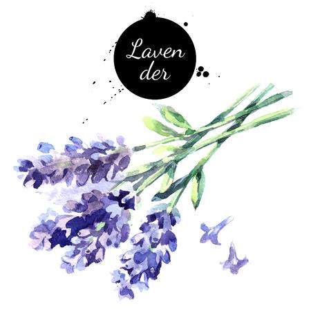 ラベンダーの花の水彩手描き下ろし束。白い背景の上の隔離された環境天然ハーブ イラスト