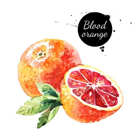 Watercolor blood orange. Isolated eco food fruit illustration on white background Фото со стока