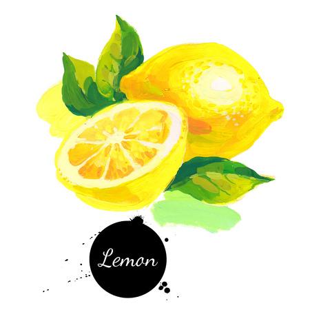 手描きのスケッチ白地アクリル水彩画。フルーツ レモンのイラスト
