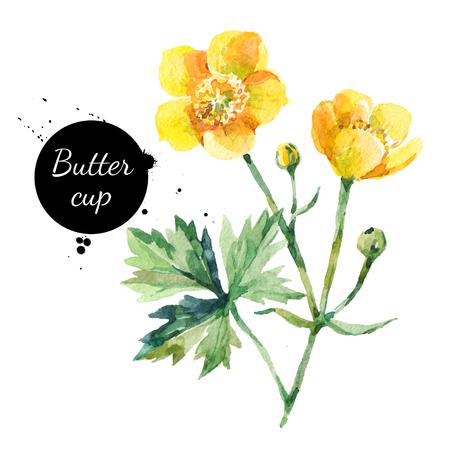 手描き水彩の黄色のキンポウゲの花イラストです。白い背景に分離された塗装スケッチ植物ハーブ 写真素材