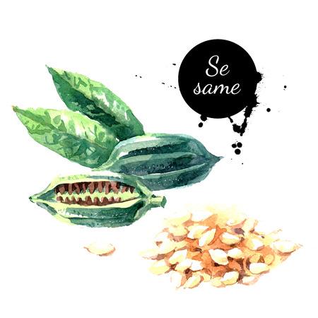 ajonjoli: Acuarela dibujado a mano sésamo. Aislado eco hierbas naturales de alimentos y semillas ilustración sobre fondo blanco