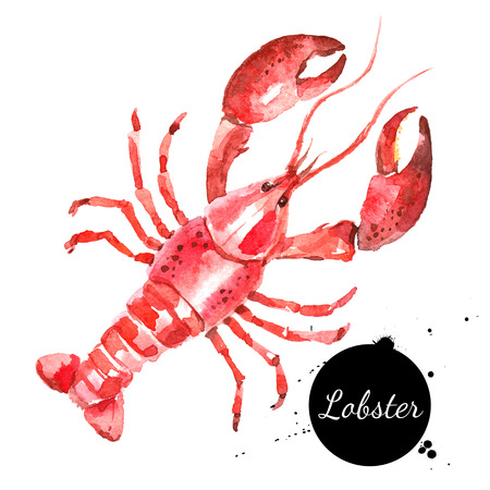 Watercolor hand drawn lobster. Isolated fresh seafood or shellfish food illustration on white background