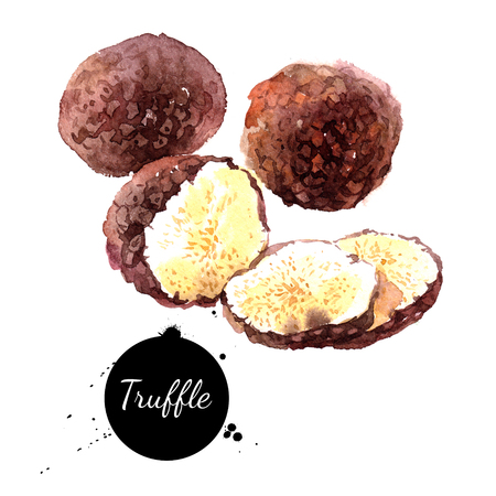 Watercolor hand drawn black truffles. Isolated eco natural food illustration on white background