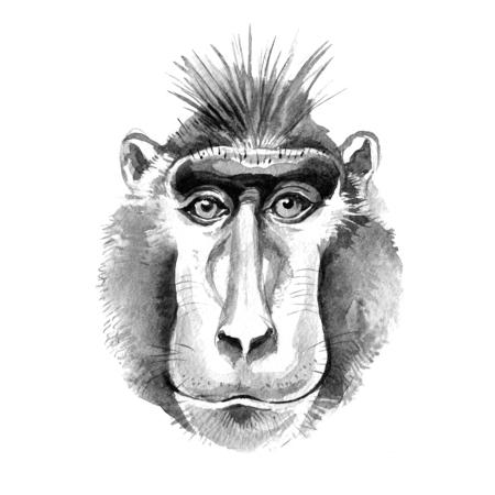Watercolor hand drawn monkey macaque portrait. Monochrome illustration