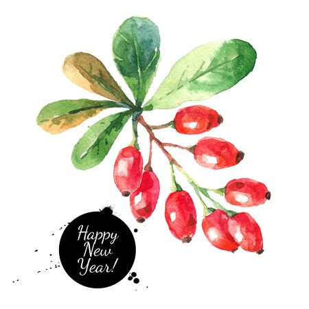 Watercolor ripe barberries. Hand drawn isolated christmas illustration Stock Photo