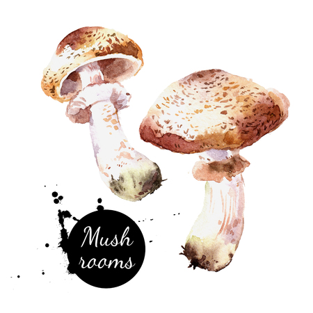 Watercolor hand drawn  wild forest mushrooms champignon. Isolated eco natural food vegetables illustration on white background  Imagens