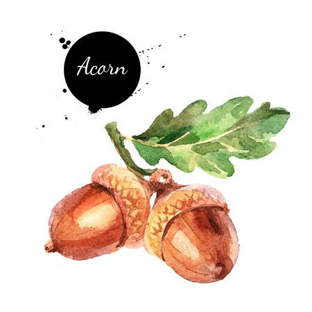 Hand drawn watercolor acorn illustration Фото со стока