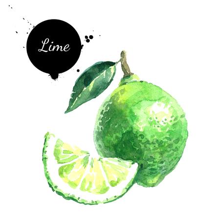水彩の手描きのライム。白い背景の上の隔離された環境自然食品果物図