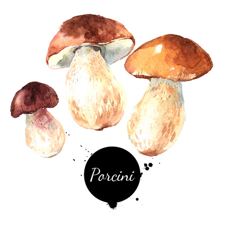 Watercolor hand drawn wild forest mushrooms porcini. Isolated eco natural food vegetables illustration on white background