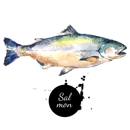 Watercolor hand drawn salmon fish. Isolated fresh seafood illustration on white background