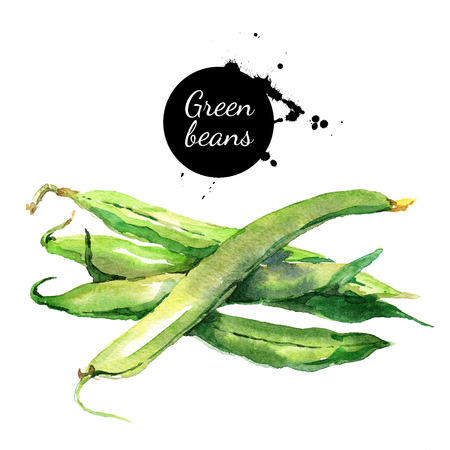Green beans. Hand drawn watercolor painting vegetable on white background Banco de Imagens