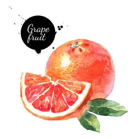 Watercolor hand drawn pink grapefruits. Isolated eco natural food fruits illustration on white background