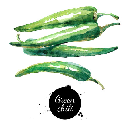 Watercolor hand drawn green chili. Isolated eco natural food vegetables illustration on white background
