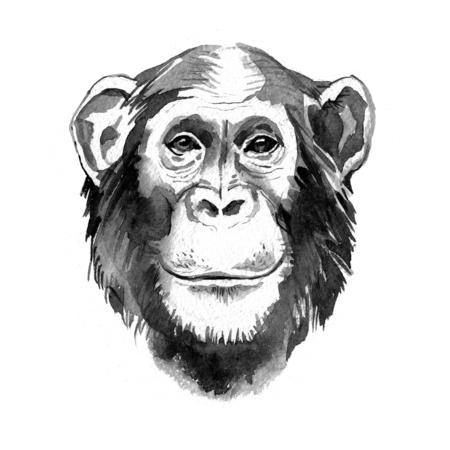 Watercolor hand drawn monkey chimpanzee portrait. Monochrome illustration Фото со стока