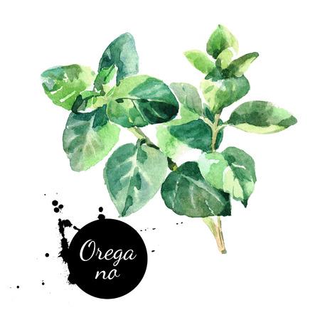 水彩の手描きのオレガノの葉。白い背景の上の隔離された環境天然ハーブ イラスト 写真素材