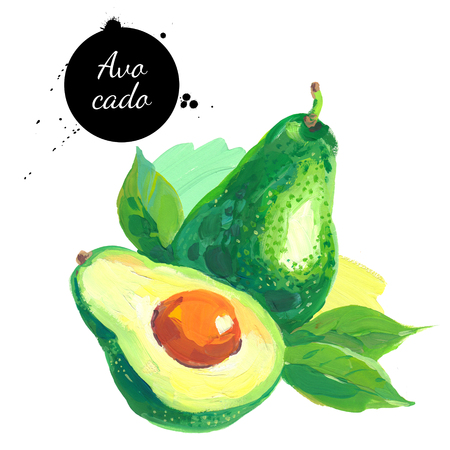 Hand drawn sketch acrylic watercolor painting on white background. Illustration of fruit avocado