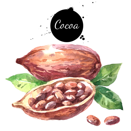 Watercolor hand drawn cocoa pod. Isolated organic natural eco illustration on white background 스톡 콘텐츠