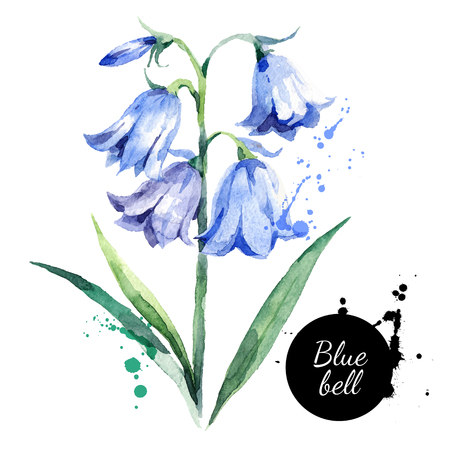 Hand drawn watercolor bluebell flower illustration. Vector painted bellflower sketch botanical herbs isolated on white background