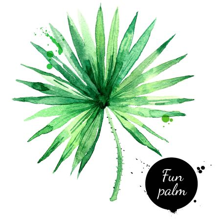 Hand drawn sketch watercolor tropical leaf fun palm. Vector painted isolated exotic nature illustration