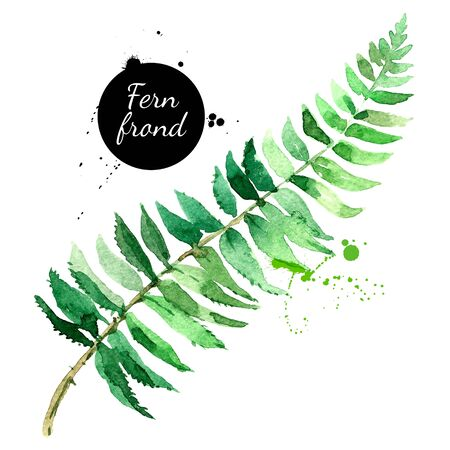 Hand drawn sketch watercolor tropical leaf fern frond. Vector painted isolated exotic nature illustration