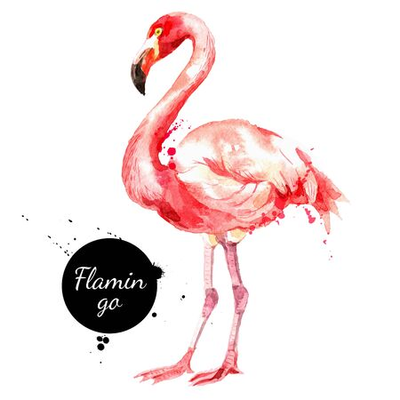 Hand drawn sketch watercolor tropical bird flamingo. Vector painted isolated exotic nature illustration