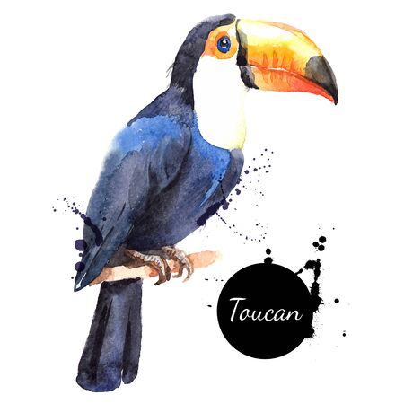 Hand drawn sketch watercolor tropical bird toucan. Vector painted isolated exotic nature illustration