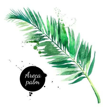 Hand drawn sketch watercolor tropical leaf of areca palm. Vector painted isolated exotic nature illustration