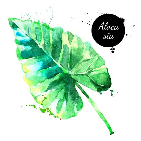 Hand drawn sketch watercolor tropical leaf alocasia. Vector painted isolated exotic nature illustration Illustration