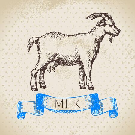 Hand drawn sketch milk products background. Vector black and white vintage illustration of goat animal Illustration