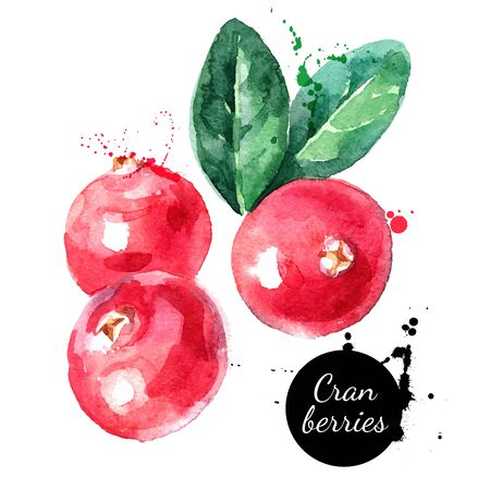 Hand drawn watercolor painting cranberries on white background. Vector illustration of berries Illustration