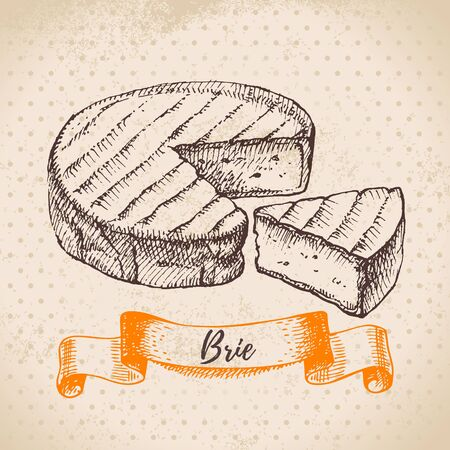 Hand drawn sketch Brie cheese background. Vector illustration of natural milk foods