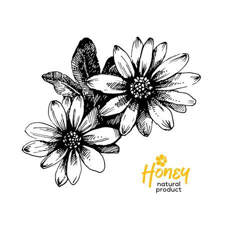 Hand drawn sketch honey background. Vintage vector illustration of flowers
