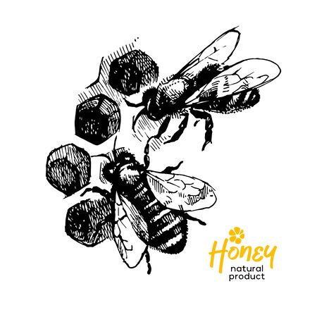 Hand drawn sketch honey background. Vintage vector illustration of bees and honeycombs